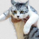 Photoshop CC(2015)「境界線の調整」で猫を切り抜き(で年賀状♪)